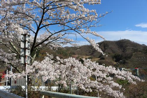 20180407荒川ダムの桜 (6)