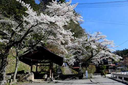 20180410金櫻神社 (1)