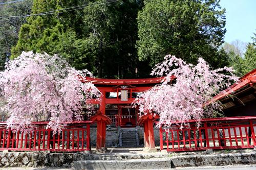 20180422黒戸奈神社 (2)