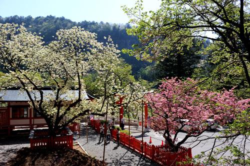20180422 金櫻神社 (3)