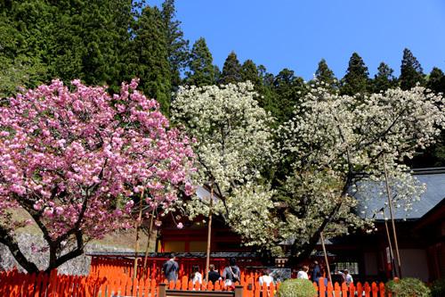 20180422 金櫻神社 (1)