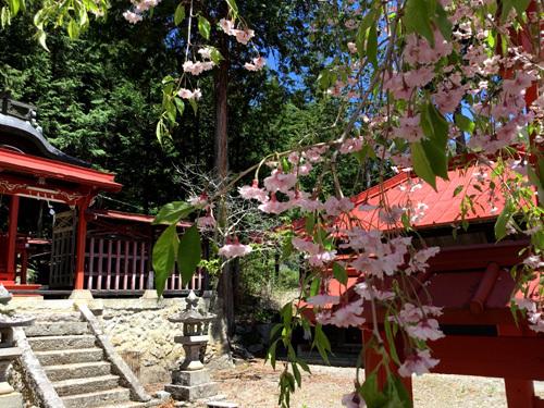 20180504金櫻神社黒戸奈神社 (1)
