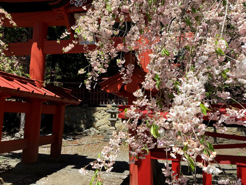 20180504金櫻神社黒戸奈神社 (2)
