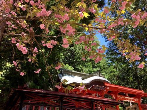 20180504金櫻神社黒戸奈神社 (4)