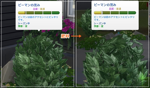 Sea_K4-24.jpg