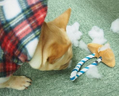 おもちゃ破壊2