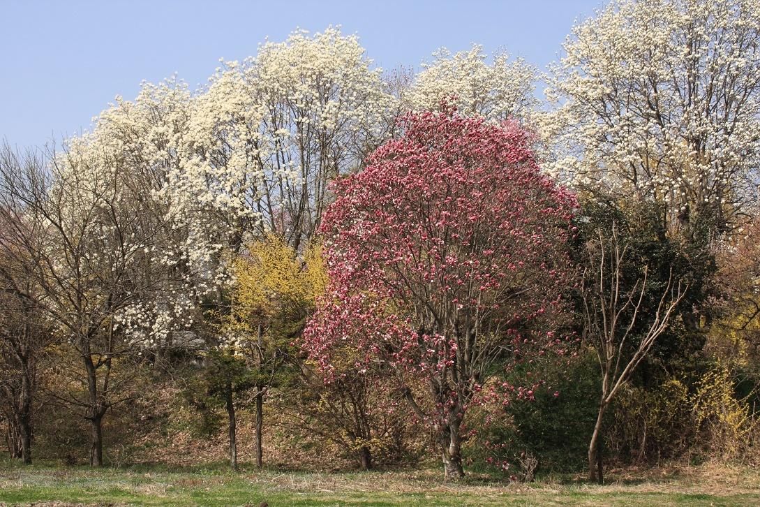 土手に並んだ花木18⑦