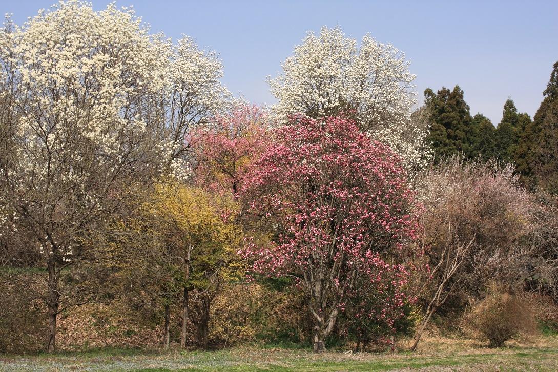 土手に並んだ花木18⑧