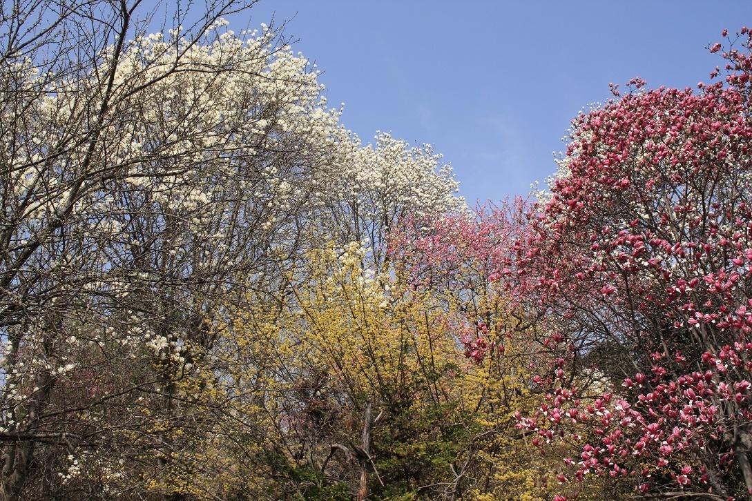 土手に並んだ花木18⑨