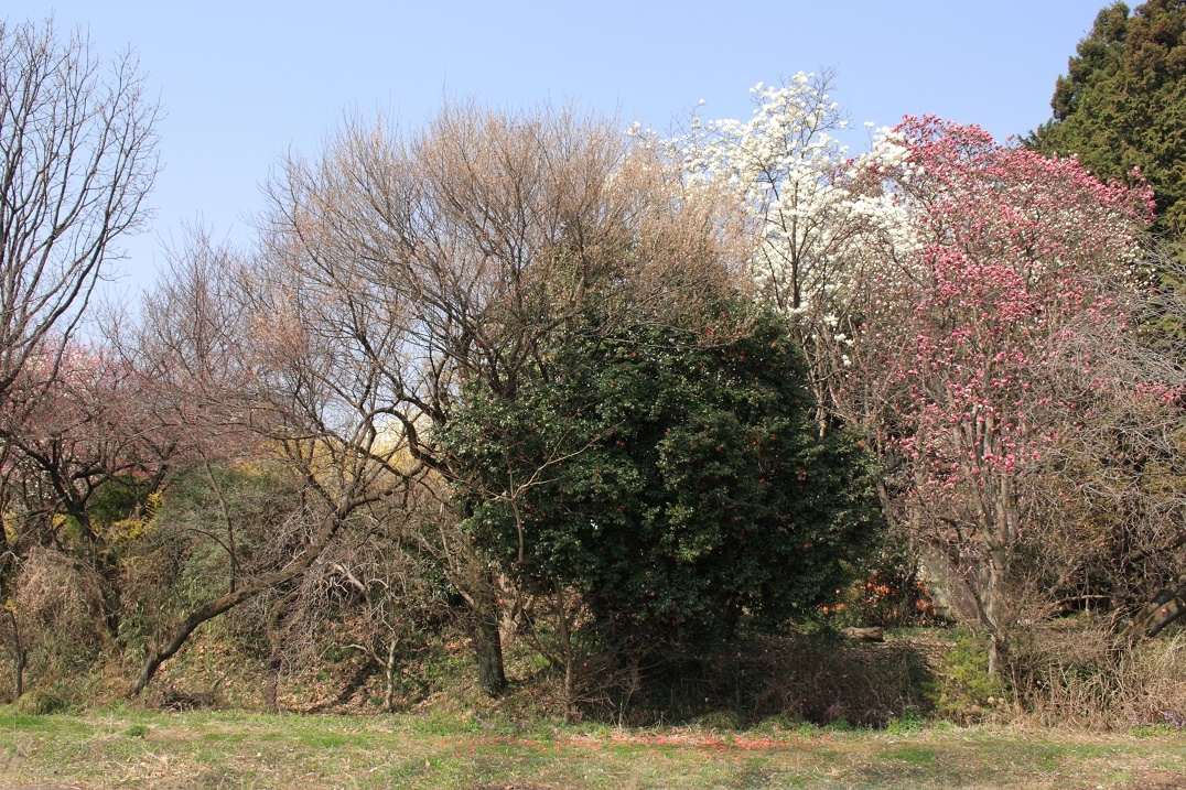 土手に並んだ花木18⑩