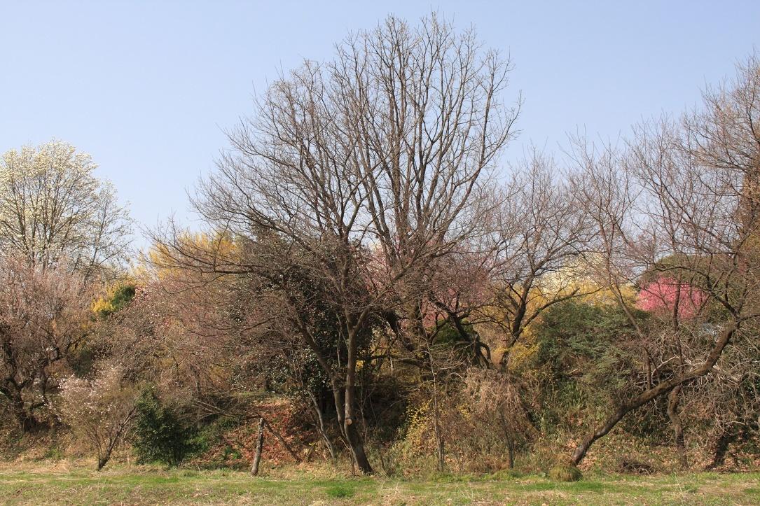 土手に並んだ花木18⑪