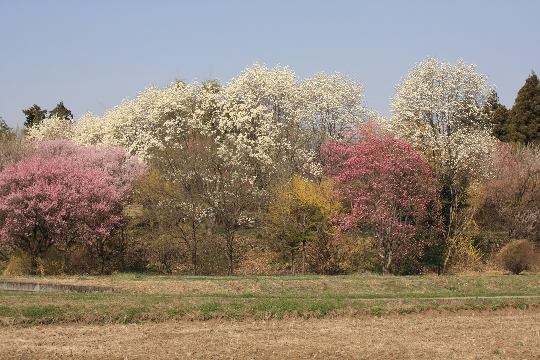 土手に並んだ花木18⑬