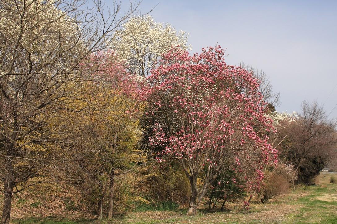 土手に並んだ花木18⑭