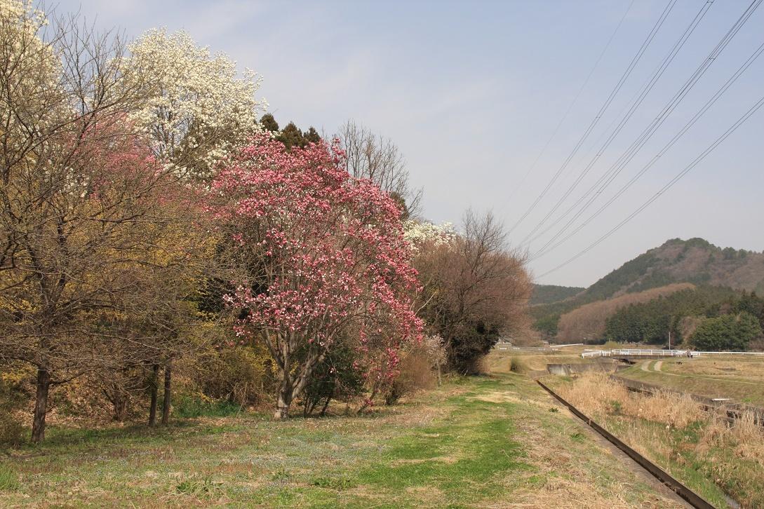 土手に並んだ花木18⑮