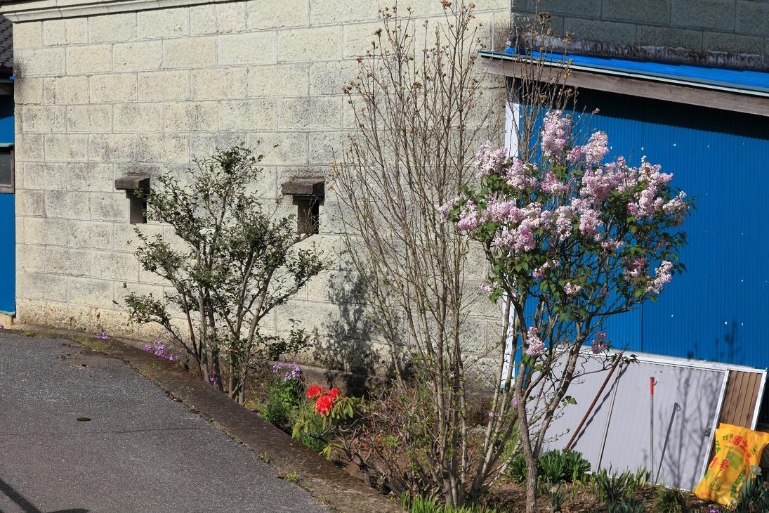 郊外の春の花③