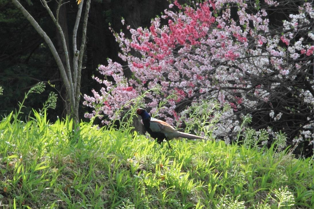 郊外の春の花18⑥