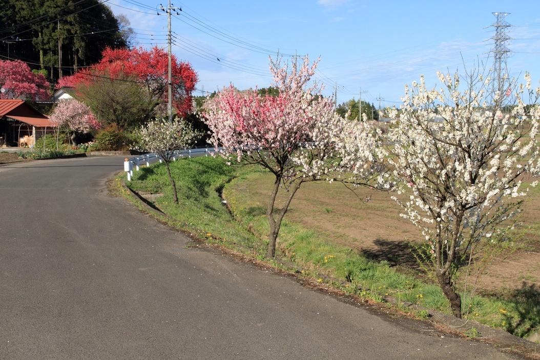 郊外の春の花18⑨