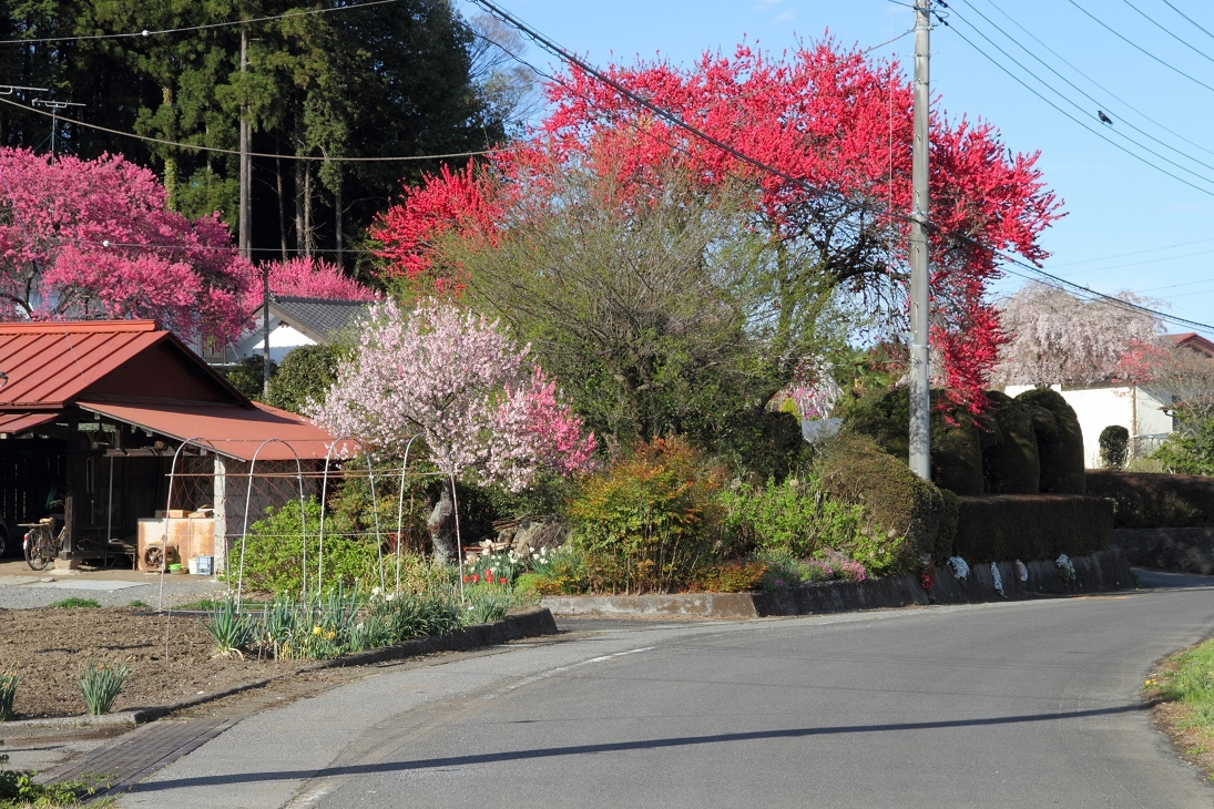 郊外の春の花18⑪