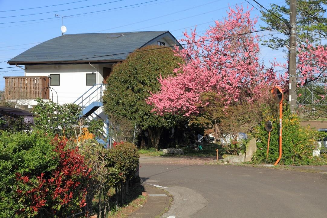 郊外の春の花18⑫