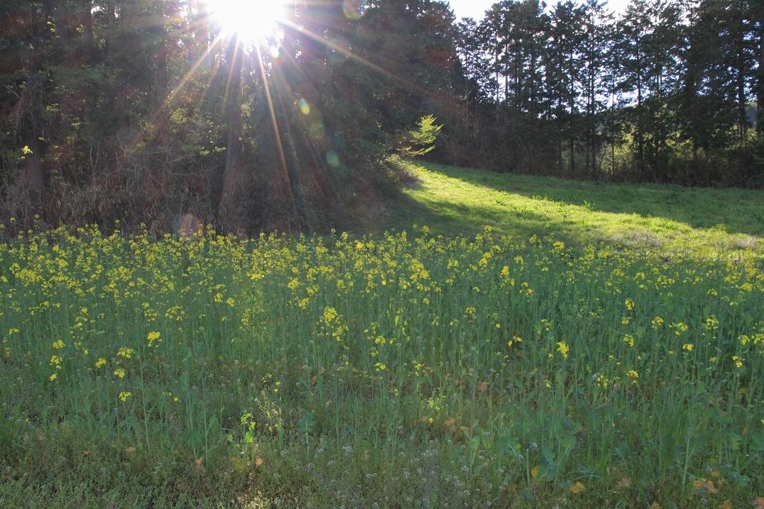 木漏れ日と春の草花18