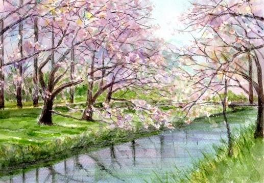伊佐沼の桜