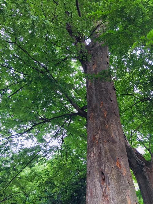tree1_convert_20180619134449.jpg