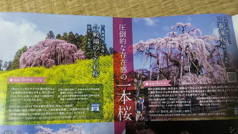 合戦場のしだれ桜サンプル180422