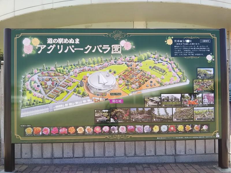 道の駅めぬまアグリパークバラ園2018