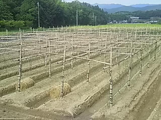 大月の自然薯園