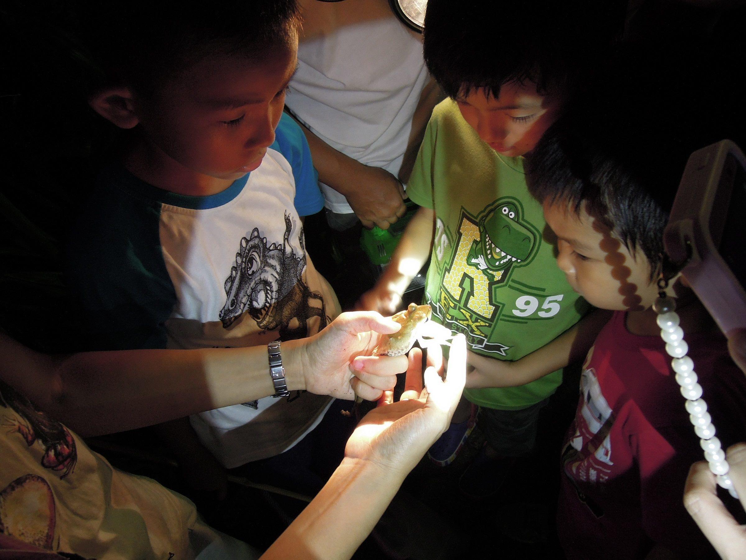 台北市で外来種のカエル駆除作戦...