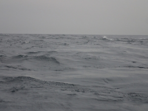 P5260006 潮がぶつかるところ発見