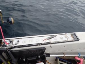 P6230014 6時半深海釣りにする