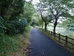 夏至の道2