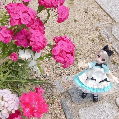 2018-05-18-庭撮り②