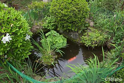 南海高野線、紀伊細川駅構内の池庭