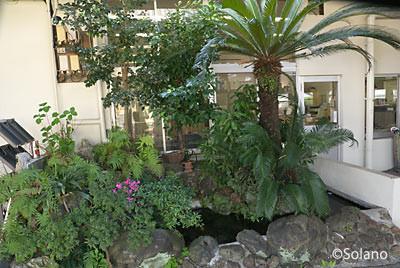 JR土讃線・須崎駅の池庭