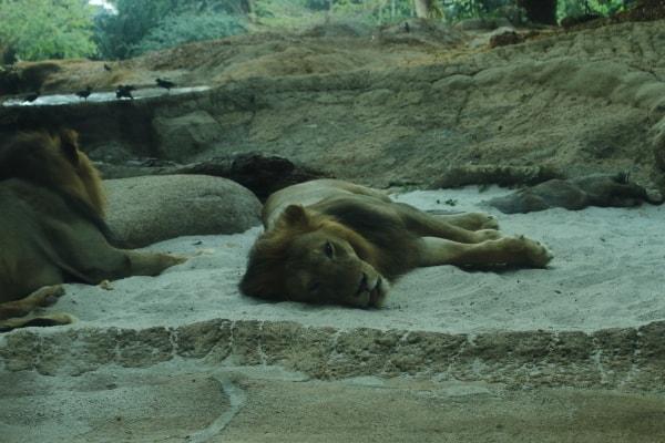 シンガポール動物園1