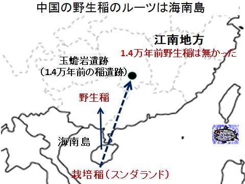 中国の野生稲のルーツは海南島
