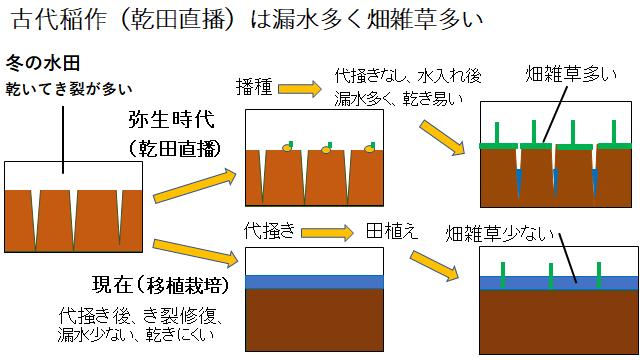 弥生時代の稲作と現代の稲作技術比較