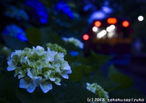 DSC_8749-2xa31.jpg