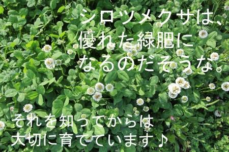 IMG_9133.jpg