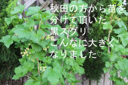 IMG_9134.jpg