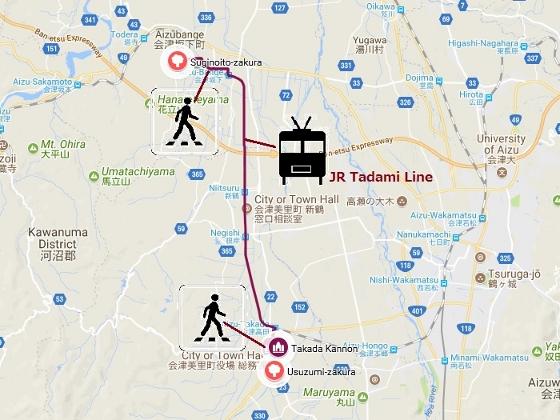 20180419杉の糸と薄墨桜 (560x420)