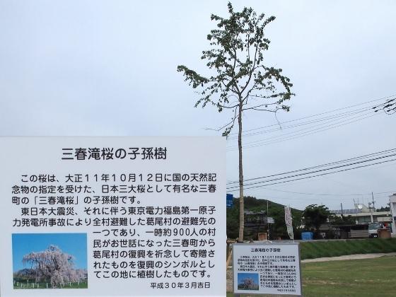 20180623三春滝桜子孫樹 (560x420)