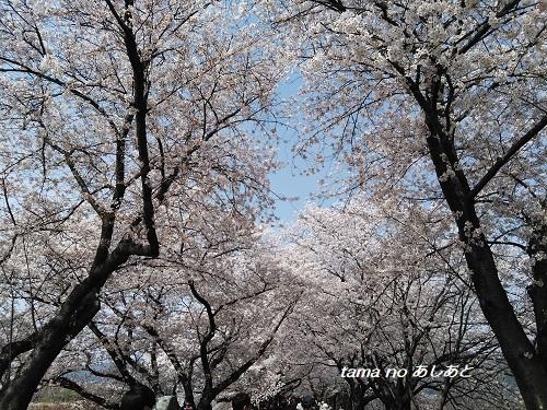 2018お花見7