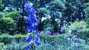 昭和記念公園⑧20180520