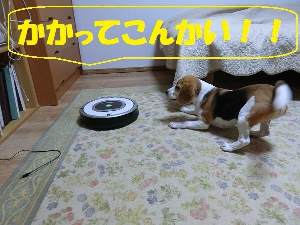 CIMG1319.jpg