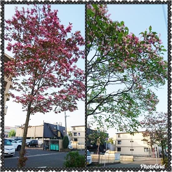 PhotoGrid_1524468514505.jpg