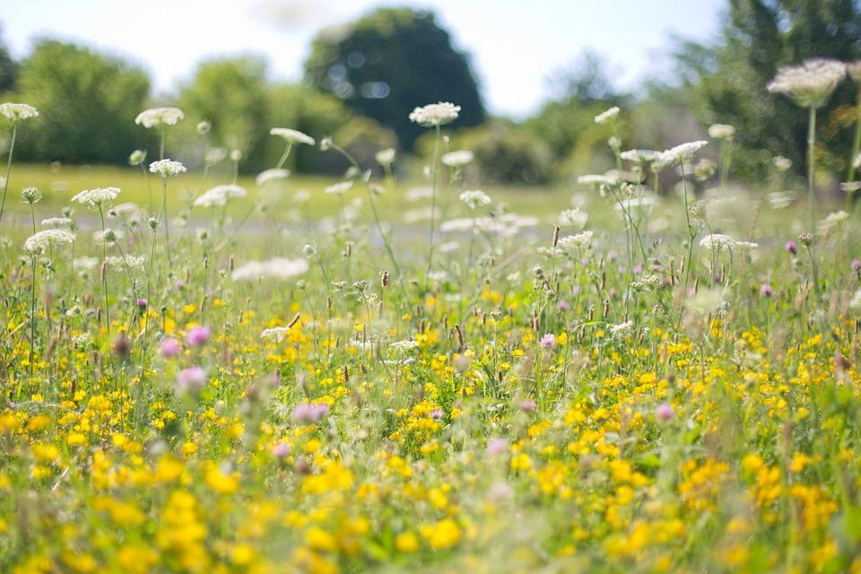 wildflowers-554122_960_720.jpg
