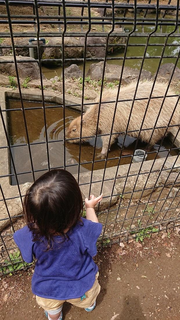 2018-2こども自然動物公園20(20180617)